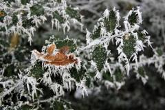 winter18jan2017 sel 11