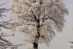 winter18jan2017 sel 12