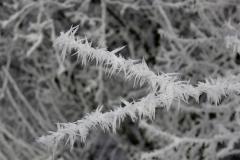 winter18jan2017 sel 13