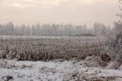 winter18jan2017 sel 16