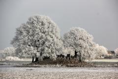 winter18jan2017 sel 2