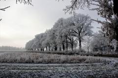 winter18jan2017 sel 6