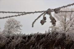 winter18jan2017 sel 7