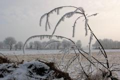 winter18jan2017 sel 8