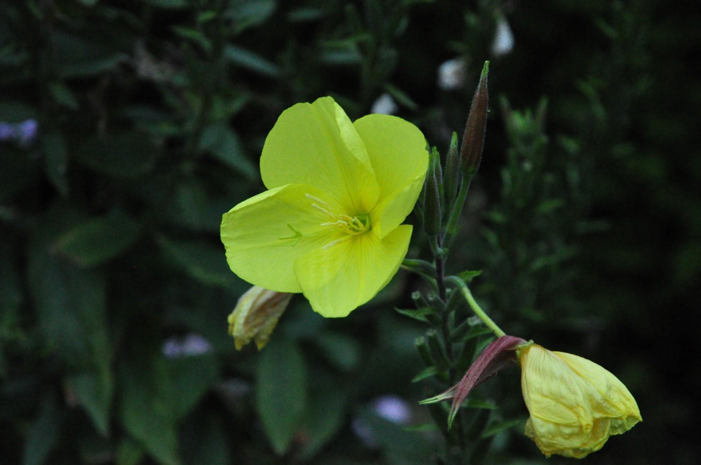 groeneloper1
