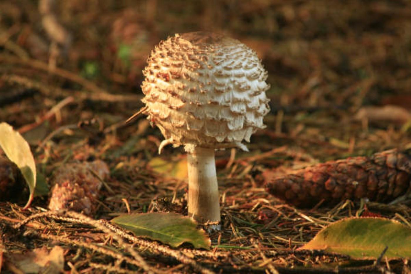 paddenstoelen 1