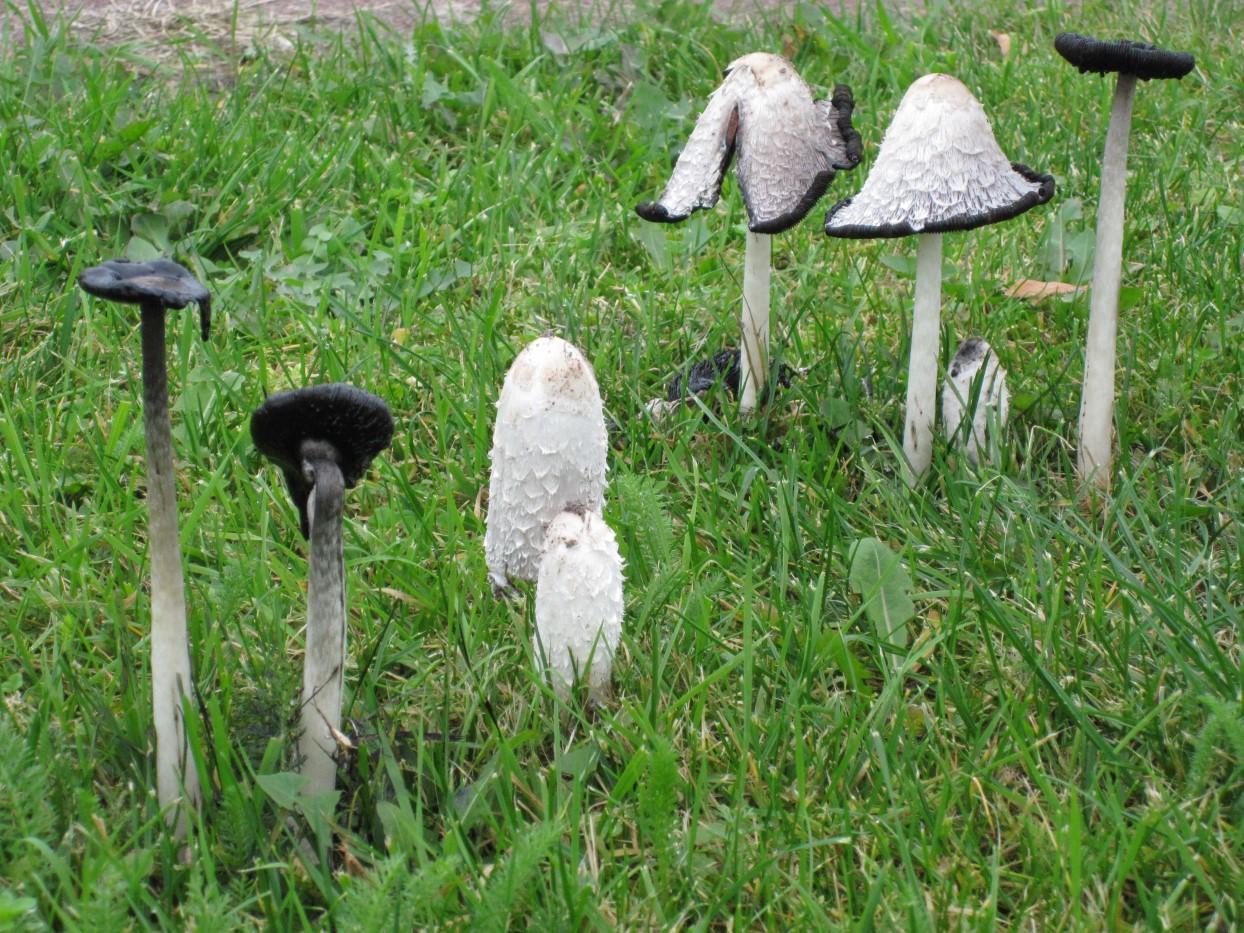 paddenstoelen 4
